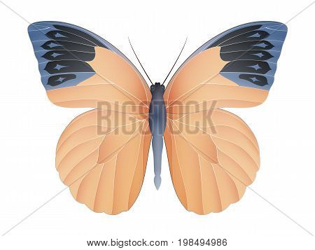 Great orange tip butterfly isolated on a white background. Hebomoia glaucippe vector 3D illustration