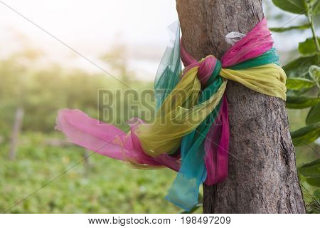 Three fabric colors tie with a tree Religious belief