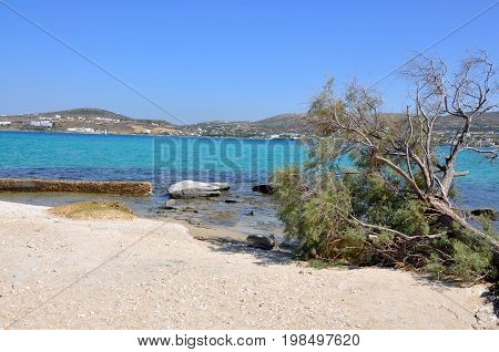 Fallen tree on beach greek beautiful motive photo Kolimbithres beach on Paros