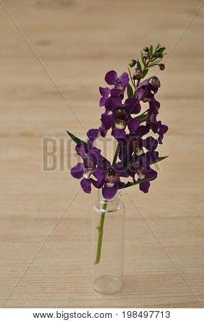 Small purple flowers isolated on a wooden background