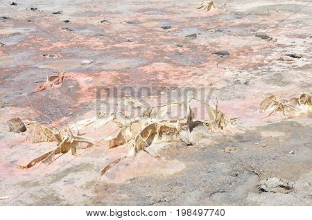 Soil salinity smelly old salinization with mold funghi coating ground place detail on Antiparos island Greece
