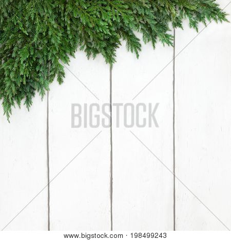 Juniper fir border on rustic  white wood background.