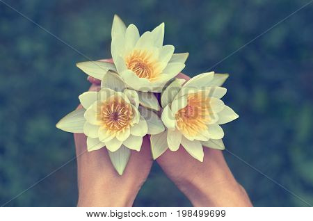 Girl Holding A Bunch Of Water Lilies. The Concept Of Beauty And Purity Of Nature. Three White Water