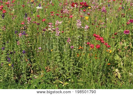 Meadow/ This is summer meadow with wildflower.