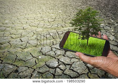 Hand of a man holding mobile phone with grass and tree on screen with Separate soil or parched ground for background. Concept about World conservation.