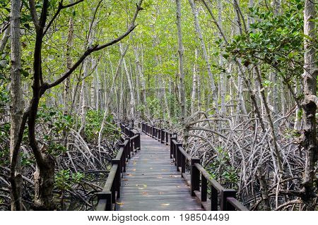 The Wooden Bridge Walkway In Mangrove Forest At Pranburi Forest National Park, Prachuap Khiri Khan,