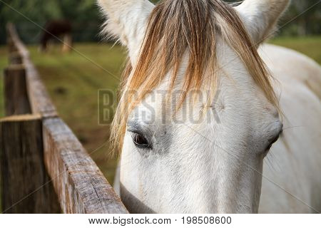 Gray Horse Head In Close-up