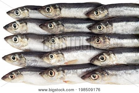 Fresh fish in a row on a white background