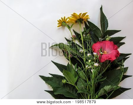Bouquet of wild plants flowers isolated on white background. Yellow Topinambour flowers pink beautiful Malva arborea flowers of the clover and white small flowers of the Erigeron annuus