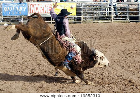 APACHE JUNCTION, AZ - FEBRUARY 28: A competitor rides a bucking bull in the bull riding competition at the Lost Dutchman Days Rodeo on February 28, 2009 in Apache Junction, AZ.