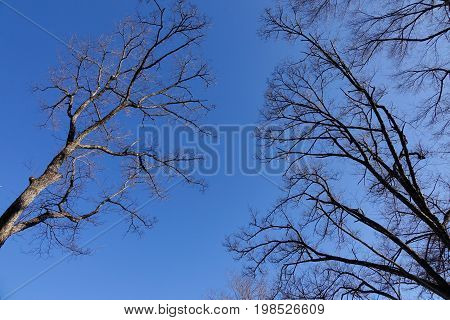 Trees At Forest In Winter