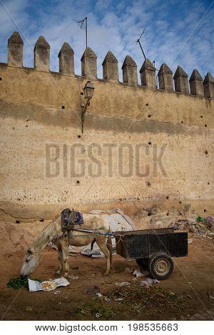 Donkey In Fez, Morocco.