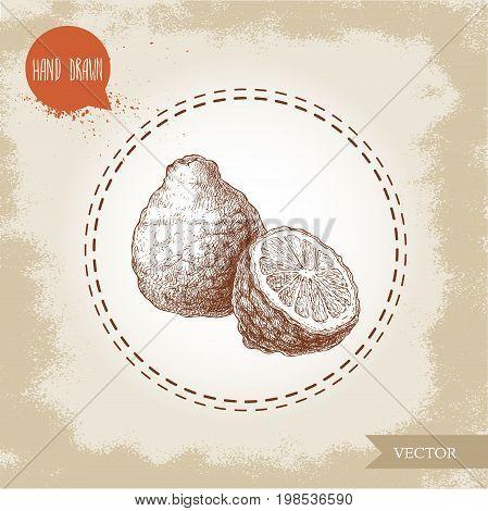 Hand drawn sketch style composition of bergamot fruit. Kaffir lime whole and half vector illustration. Organic food. Citrus on vintage background.