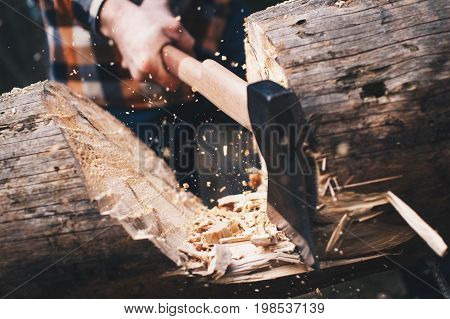Woodcutter In The Woods Cuts A Large Tree With A Sharp Ax. Chips Fly Apart