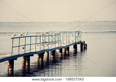 The seagulls standing on the bridge fence near the river or pond. photo