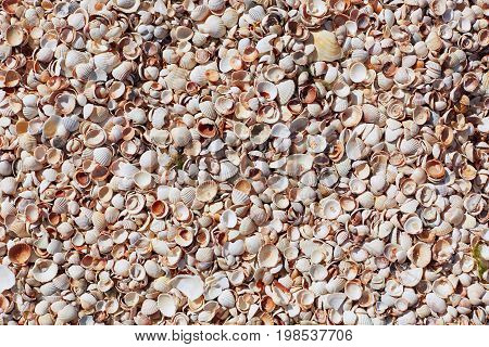 Sea Shells On Sand Beach. Composition Of Exotic Sea Shells. Shells Of Various Kind As Background. Fl