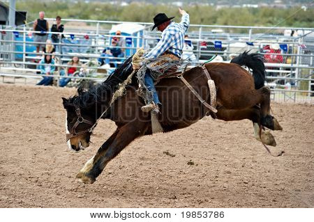 APACHE JUNCTION, AZ - FEBRUARY 26: A cowboy rides a bucking horse in the saddle bronc competition at the Lost Dutchman Days Rodeo on February 26, 2010 in Apache Junction, Arizona.
