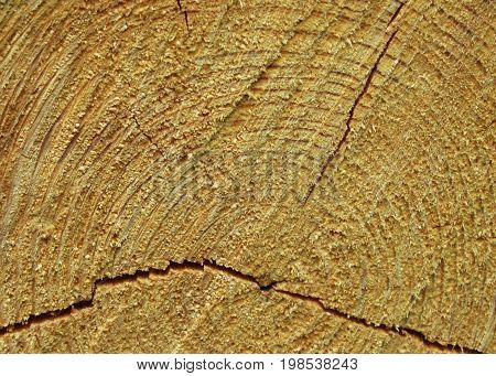 macro cracked wood stump texture photo - brown