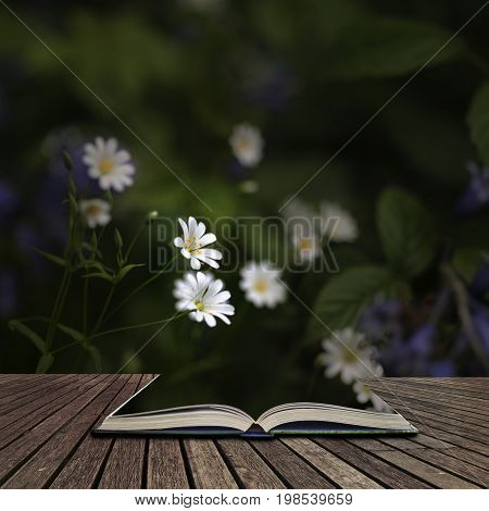 Stunning High Contrast Vibrant Image Of Wild Daisies On Spring Forest Floor Concept Coming Out Of Pa
