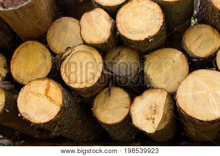 Pile of logs stacked to be cut. They are collected in a forest.