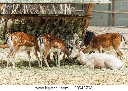 Deer eating grass food nature animal outdoors.