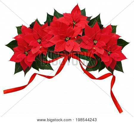 Poinsettia flowers and red ribbon bow wave arrangement isolated on white