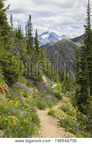 A section of the Pacific Crest Trail in northern Washington in the Cascades. The mountain side trail is covered in wild flowers, including lots of lupine in the summer.