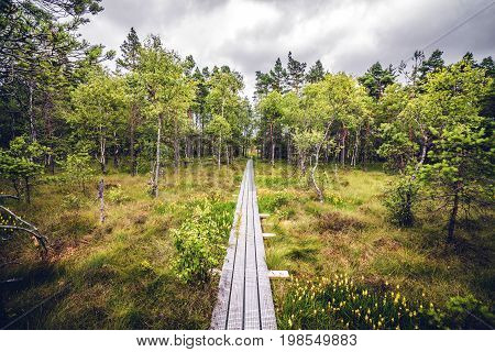 Wooden Nature Trail Made Of Planks