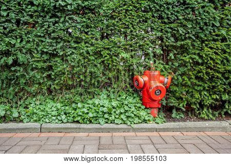 The longest street there is a hydrant in the bushes