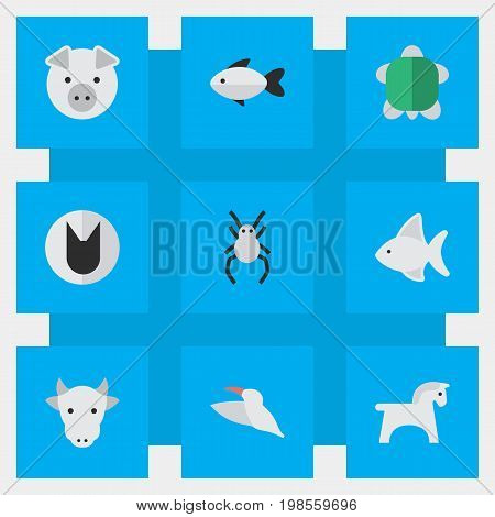 Elements Tortoise, Steed, Tarantula And Other Synonyms Tortoise, Animal And Milk.  Vector Illustration Set Of Simple Animals Icons.