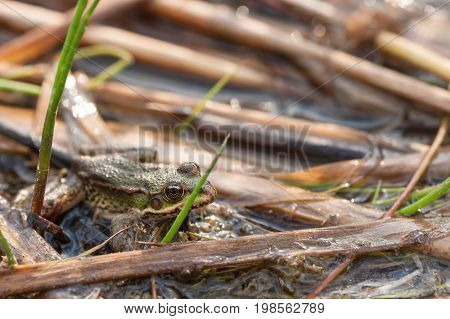 The frog sits on cane. Close up view.
