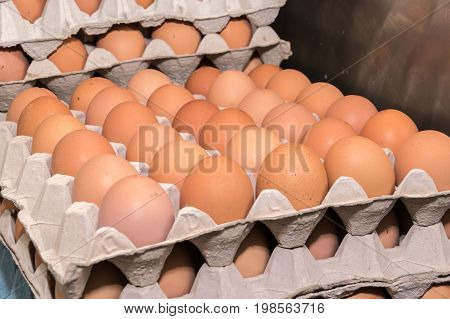 Rows of Chicken eggs stacked in trays