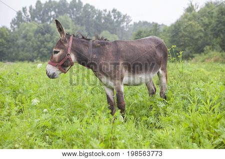 young cute donkey grazing on the grassland