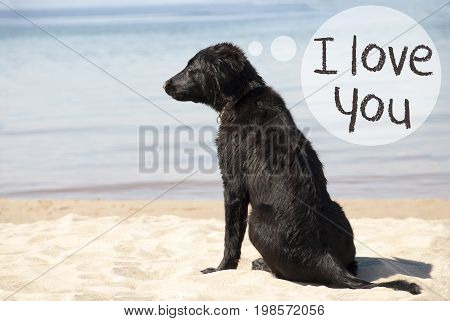 Speech Balloon With English Text I Love You. Flat Coated Retriever Dog At Sandy Beach. Ocean And Water In The Background