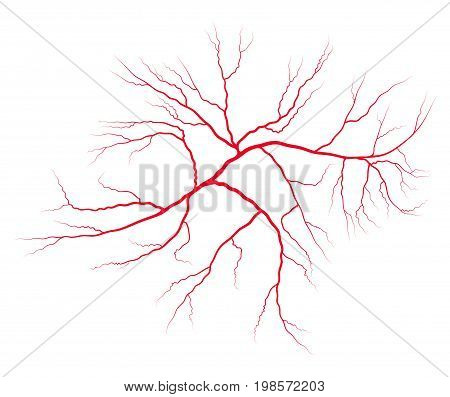 Vein Blood System Vector Symbol Icon Design. Beautiful Illustration Isolated On White Background
