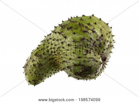 Soursop is a dark green and prickly fruit of the broadleaf evergreen tree Annona muricata with a juicy acid whitish and aromatic flesh.