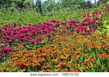 Perennial flowers Pink Monarda and Orange Rudbeckia in a herbaceous border.