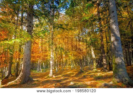 Autumn forest wood scene with golden sun light illumining the foliage and a footpath leading into the woods