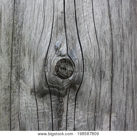 The Texture Of The Wood. Wooden Mote. Closeup