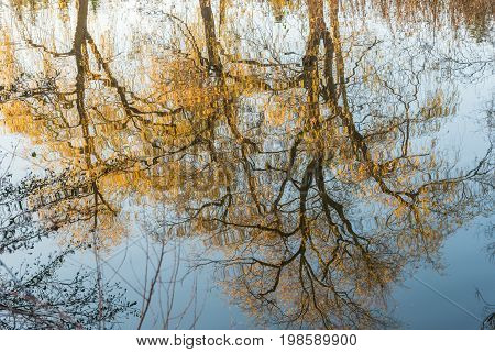 Golden trees water reflection. Autumn season in Toronto Ontario Canada
