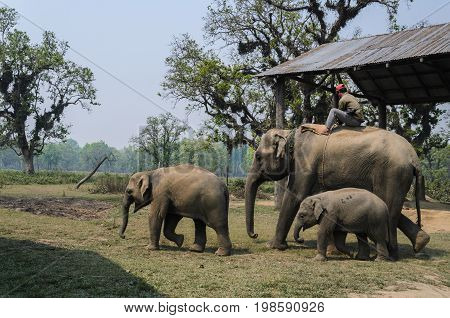 Chitwan National ParkNepal - April 15 2014: Elephant ride