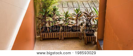 Green potted plants. Different potted plants and seedlings