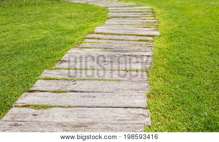 Pathway in garden, green lawns with wooden pathways, garden landscape design.