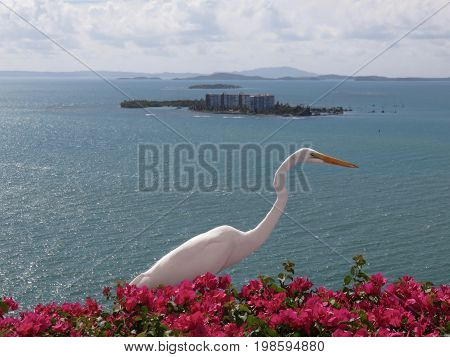 Great White Egret/Heron on top of Bougainvillea on a cliff in Puerto Rico.