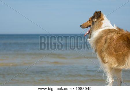 Dog Watching At Sea