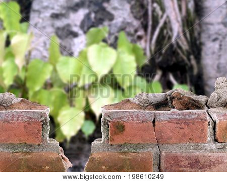 close up old brick wall surround the bodhi tree, part of old building and trees in ancient temple of buddhism