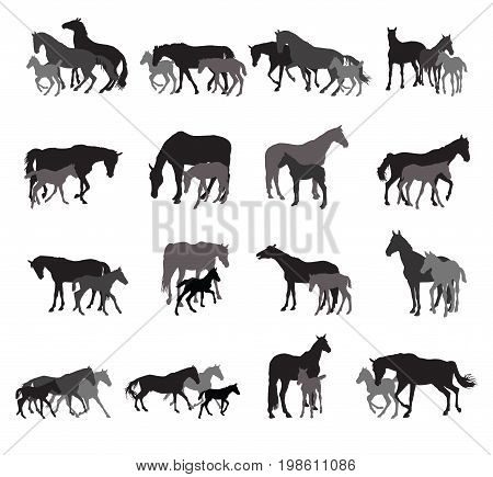 Group of black and grey isolated silhouettes of horses (stallions mares and foals) standing walking running on white background. Vector illustration.