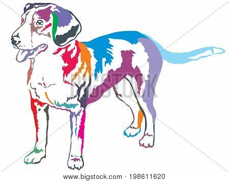 Colorful decorative portrait of standing in profile Entlebucher Mountain Dog vector isolated illustration on white background