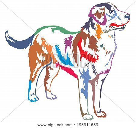 Colorful decorative portrait of standing in profile Greater Swiss Mountain Dog vector isolated illustration on white background