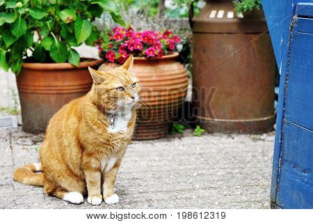Cute beautiful adorable red cat near plant jar